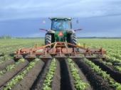 Cultivator de rand Struik ZF